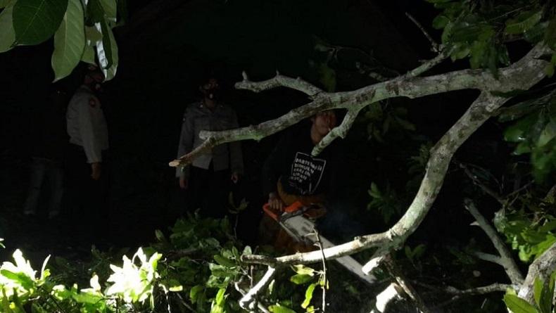 Petugas mengevakuasi pohon tumbang akibat puting beliung di Lombok Barat. (Antara)