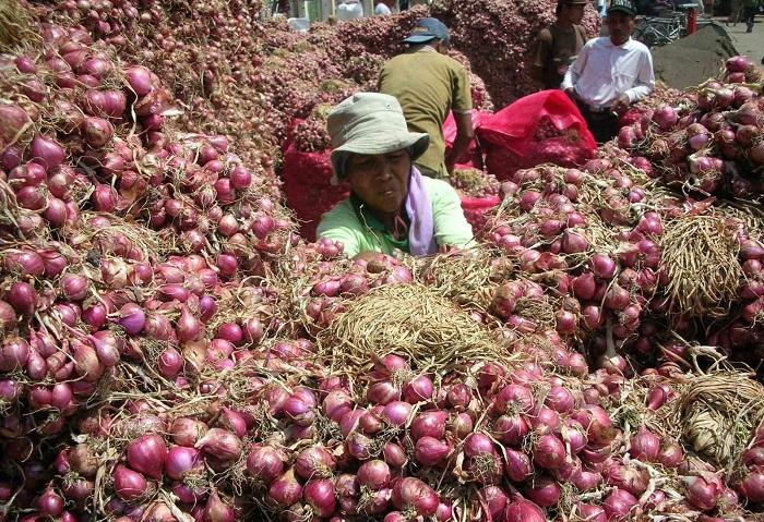 Seorang petani baru saja memanen bawang merah. (Media Indonesia)